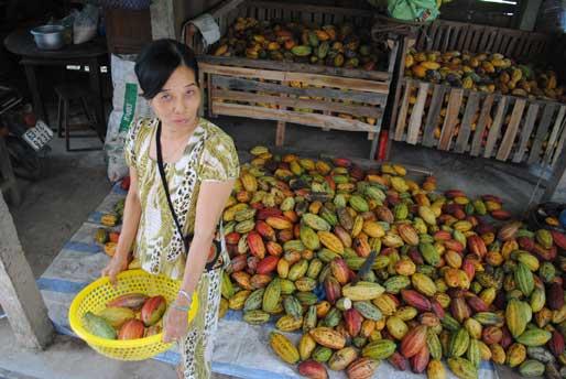 Marou _kakaofrukter _choklad _beantobar _premium _distribution _vietnam _web